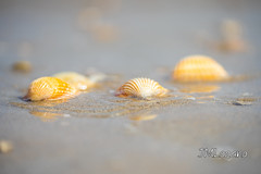 entorno natural (josmanmelilla) Tags: mar melilla playas verano agua pwmelilla pwdmelilla pwdemelilla españa sony