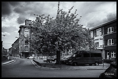 2018-06-16-Vennes-Campagne-13Pt (Pontalain) Tags: liège placedesvennes platz strase vennes arbol arbre baum bw calle place rue strasse street tree