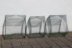 Wire baskets (dididumm) Tags: wirebasket protection garden enemy watervole mouse maus wohlmaus garten feind schutz drahtkorb