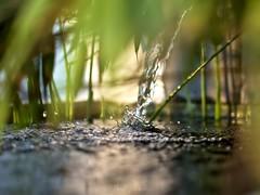Zen (David Bertholle) Tags: zen water fontaine bamboo jardin garden ngc relax d7200 dof drop nature