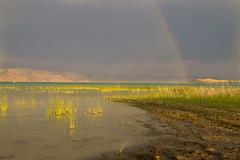 Natural Light Show on the Lake (aaronrhawkins) Tags: rainbow rainstorm rain lake bearlake grass mud water green blue light beautiful nature natural marsh utah gardencity aaronhawkins