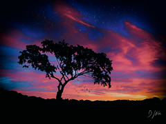 Evening Skies (domwlive) Tags: trees summer june sunset skies googlenikcollection topazlabs silhouette countydurham landscapes evening northeastengland clouds wingate england unitedkingdom gb