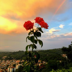 A Tuscan sunset (Rick Payette) Tags: florence sunset flower tuscany italy iphone