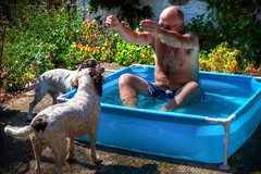 The Dogs Pool (Missy Jussy) Tags: funny laughter life fun man mansbestfriend malespringerspaniel trevorkerr pets dogs pool water englishspringer springerspaniel spaniel garden labrugere southcentralfrance saintyrieixlaperche canon 5d canon5dmarkll canon5d canoneos5dmarkii holiday holidaycottage outdoor outside sunlight france ef70200mmf4lusm