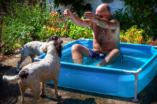 The Dogs Pool