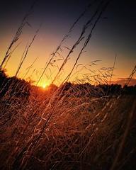 Have a wonderful weekend folks! (jonmacephotography) Tags: countryside grasslands glow calm evening sun sunset