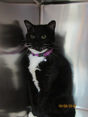 Falcon - 4 year old spayed female