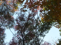 a (39) (hiromi89) Tags: japan beauty beautiful scenery flower wood pond