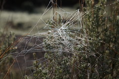 Spiderweb Constellation No 3 (ikewinski) Tags: newmexico spiderwebs