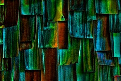IRIDESCENCE - AN ABSTRACT- (panache2620) Tags: colors iridescent art abstract photoart photoartistry detail candid creative fineart modern eos canon
