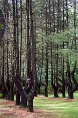 Surreal Forest (RockN) Tags: sculpture trees sevenhillsinn berkshires august2018 lenox massachusetts newengland