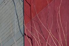 Ramas y algo más (¿se ven unos cables?) (Ce Rey) Tags: wall pared abstract arquitectura ramas cables wires sombras shadows textura textures branch