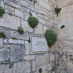 Štit samostana sv. Franje u Puli (132PEACE_0386) thumbnail