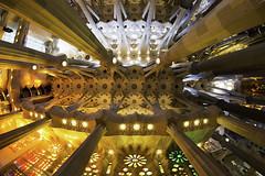 Sagrada Familia (mg photography2) Tags: lasagradafamilia sagrada familia barcelona gaudi culture roof ceiling architecture architectural canon travel icon historic beautiful epic cathedral catalonia spain europe