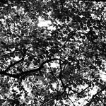 natural pattern thumbnail