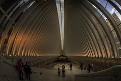 """The Oculus"" WTC Transportation Hub (Steve Rosenbach) Tags: financialdistrict lowermanhattan manhattan nyc newyorkcity oculus"