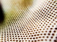 Dune mesh (fernanmz74) Tags: macromondays mesh bokeh macro textile texture hmm 7dwf