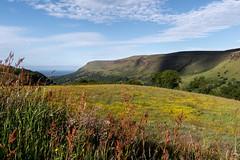 Glenariff       Landscape (JB_1984) Tags: view vista landscape shadow flower wildflower glenariffforestpark glenariff causewaycoastandglensdistrict countyantrim northernireland uk unitedkingdom nikon d500 nikond500