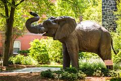 160616_1783_NatTranCampus.jpg-13.jpg (greentufts) Tags: jumbo statue summerstock stock jumbostatue campus academicquad elephant 2016 medfordsomerville mass unitedstates usa