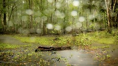 Raindrops on Glass (JDS Fine Art Photography) Tags: forest rain stormy trees woods inspirational atmosphere longexposure