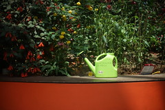 DSC04418- Red Wall and Green Plastic (oliveplum) Tags: gardensbythebay flowerdome minoltarokkorf1450mm light sony singapore red green