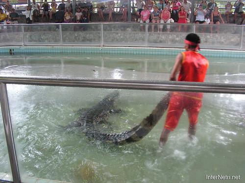 В пащу крокодилу Паттайя Таїланд Thailand InterNetri 02