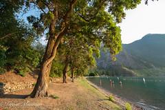 28 (munn1) Tags: 2018072830lillooetwistler nikon nikor nik britishcolumbia goldenhour lake setonlake canada color tree week282018 52weeksin2018 weekstartingmondayjuly092018