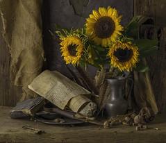The Fate of Flowers (GARY HICKIN (GAZART)) Tags: stilllife vanitas flower sunflowers yellow paper manuscript scissors stone dice book pentaxart still life photography stilllifephotoart