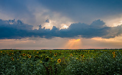 Some kind of Heaven (gabi_halla) Tags: cloud cloudy clouds sky sunshine sunlight light lights lanscape sunflower field monumental green blue sunset