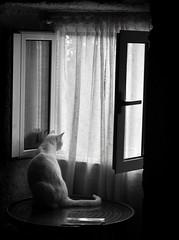 A última luz do día (carlosdeteis.foto) Tags: carlosdeteis galiza galicia gatos jatos cats littledoglaughednoiret
