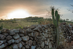 Triunfo's Sunset (ruifo) Tags: nikon d810 nikkor afs 24120mm f4g ed vr pôr por puesta sol sunset triunfo pe pernmabuco brazil brasil landscape paisagem paisaje muro pedra stone wall piedra cactus catcto mountain montanha montaña rural sertao sertão