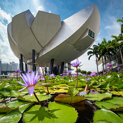 Art Science Museum & The Lotus (claustral) Tags: 2018 singapore asia architecture building artsciencemuseum lotus flower water pond sky panorama ptgui