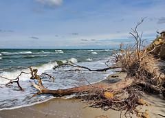 Kliffküste (Wunderlich, Olga) Tags: kliffküste wustrow mecklenburgvorpommern fischland ostsee bäume wellen himmel blau wolken sand steine landschaft natur