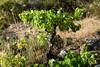 DSC_2174-939 (kytetiger) Tags: parque natural sierra de baza acequia toril andalousie andalousia