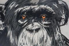 Compassion (just.Luc) Tags: darwin bordeaux gironde nouvelleaquitaine france frankrijk frankreich francia frança urbanart streetart graffiti grafitti chimpansee schimpanse chimpanzé chimpanzee quote citation citaat think meaning