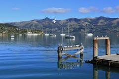 Akaroa Harbour (Steve Attwood) Tags: auldwoodphotography steveattwood newzealand canterbury bankspeninsula landscape sea ocean harbour coast yacht wharf akaroa akaroaharbour