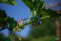 20180708_165746_04_v1L_4K+ (jmi.eck) Tags: vert bleu mousqueton ciel plant potiron poil feuilles fil bokeh pentaxk1 smcpentaxda50mmf18 aficionados simplysuperb green blue plante wire plasticwonder