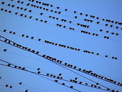 Birds (janepesle) Tags: moscow bird sky nature summer flight catbird птица природа лето стая небо красота