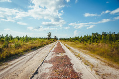 Old Dixie Highway (J. Parker Natural Florida Photographer) Tags: olddixiehighway historic road brickroad rural history old florida vsco vscofilm countryroad flaglercounty palmcoast