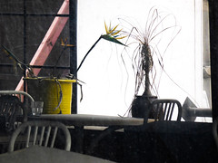 The Empty Cafe (Steve Taylor (Photography)) Tags: glass fork joist chair table yellow white newzealand nz southisland canterbury christchurch cbd city plant flower flowerpot quake eathquake driedup window
