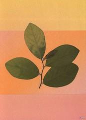 葉子の壁紙プレビュー