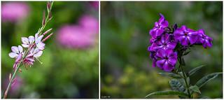 The garden in June...