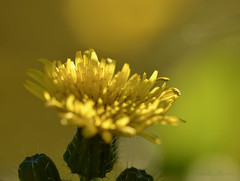 Between light and shadow (avnz101) Tags: flower nature light sun shadow