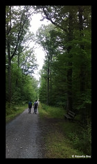 """Travellers (RanadipRoy) Tags: """"nokialumia520"""" people men travellers tourists walk travel trek trail explore journey friends tour road path pavement gravel stones trees jungle woods forrest bench leaves branches nature outdoor holiday park stroll stuttgart badenwürttemberg germany"""