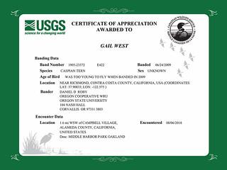 Certificate of Appreciation - Caspian Tern E422
