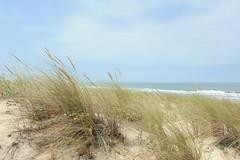 DSC_9461 (nicolas.blanchard83) Tags: landes moliets dunes nature vent oyat