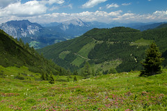 Around Hauser Kaibling (smir_001) Tags: july summer landscape austria österreich styria steiermark alpine subalpine altitude flora nature plants outdoor hiking austria2016 canoneos7d hauserkaibling hausimennstal planai shladminger mountains valley mountainvalley