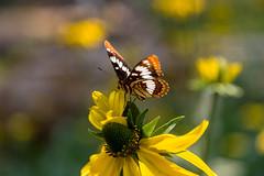 Tuolumne Grove, Yosemite NP (Matthew.Young) Tags: california unitedstates us yosemitenationalpark