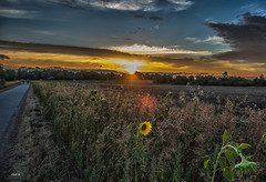 bytheway (Heinertowner) Tags: darmstadt oberfeld sunset hessen germany deutschland alemagne sonne wolken himmel sky clouds sun solei nikon d3300 tameon 1750mm nik