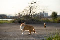 猫 (fumi*23) Tags: ilce7rm3 sony 85mm fe85mmf18 sel85f18 katze gato neko cat chat animal port harbor a7r3 emount ねこ 猫 ソニー 港